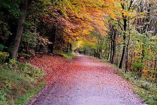 Dalby Forest October 2012