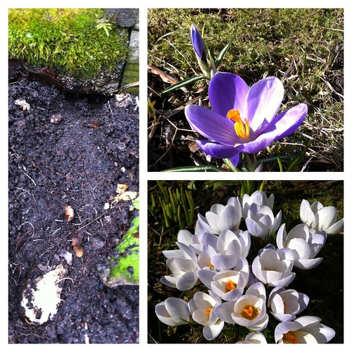Kevät by niini