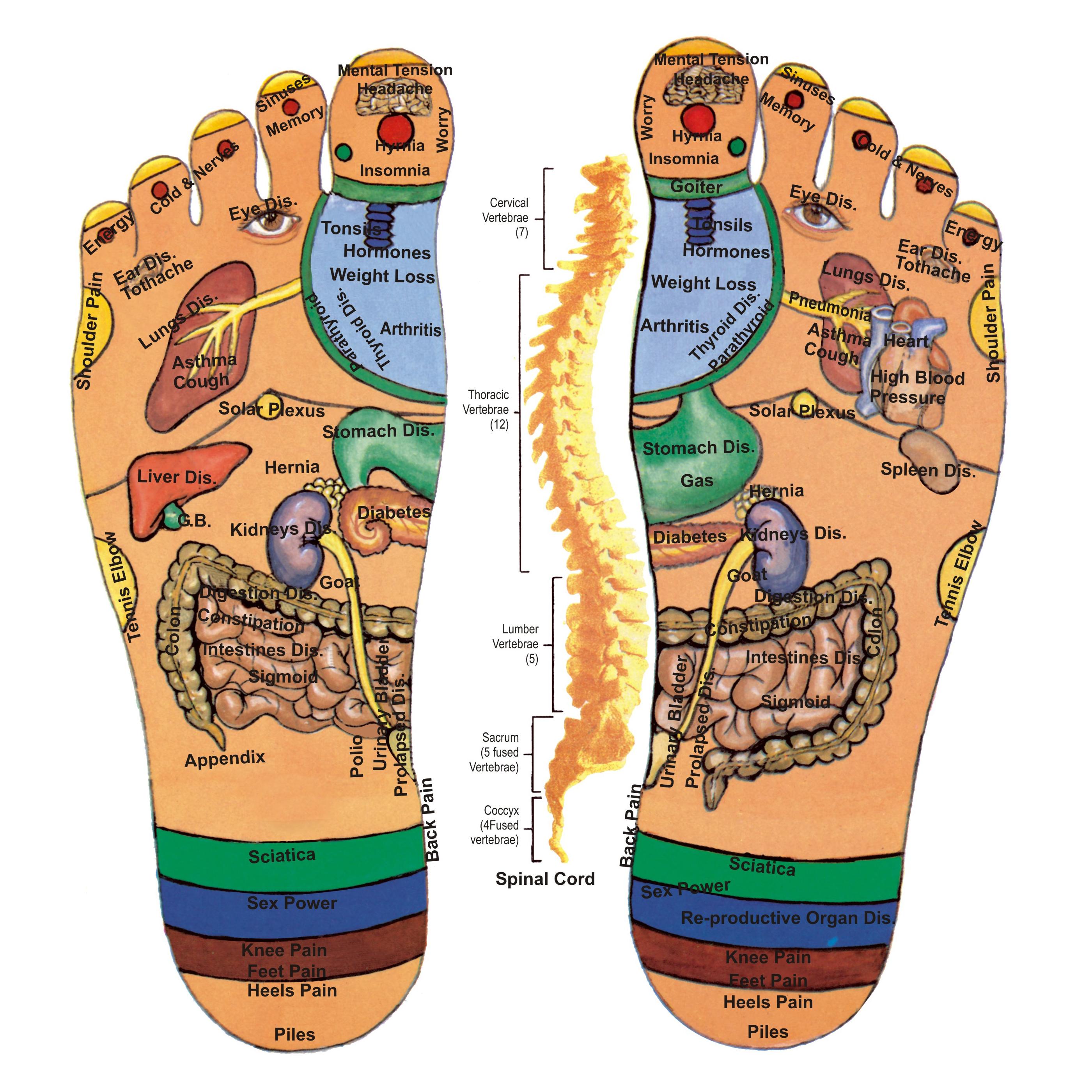 腳底按摩 按摩腳底反射區域治百病 - 準建築人 FAM 討論區