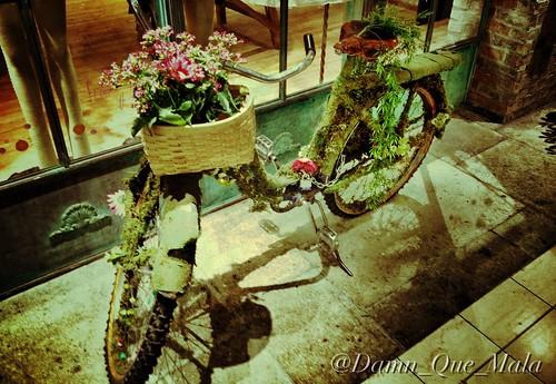Environmentally (Un)Friendly (Photo A Day 33/365) by damn_que_mala
