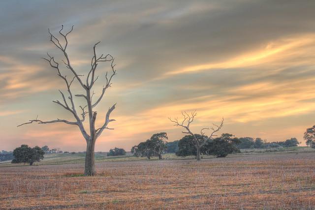 Somerton Road landscape 2012-04-06 (_MG_5895-900)