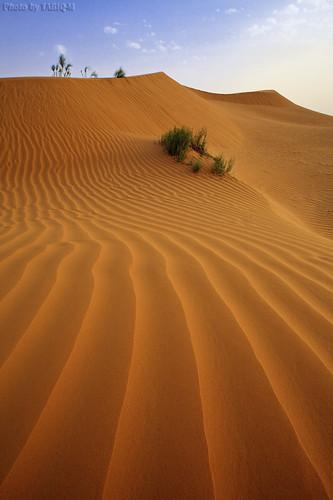 Desert Sand by TARIQ-M