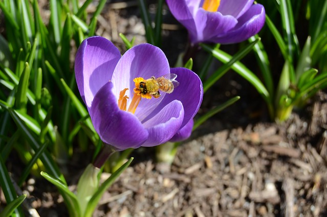 Bee and purple