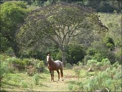 323ª Trilha - Trekking Exploratório Três Barras - Santa Maria RS_017