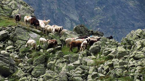 Sommer im Gebirge
