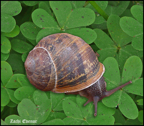 My Garden's Snail