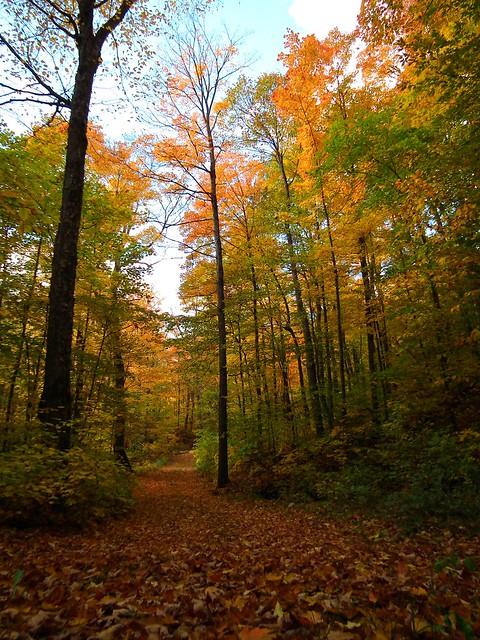 autumn colour in Quebec