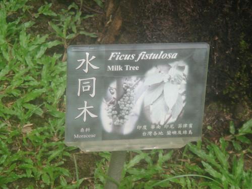 台中植物園4