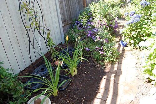 New Clematis And Daylily Planting