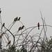 Mole National Park impressions - IMG_1189_CR2_v1