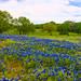 JVP_20120413_BluebonnetTrail7011