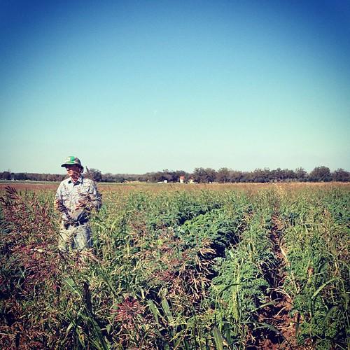 farmer in the kale