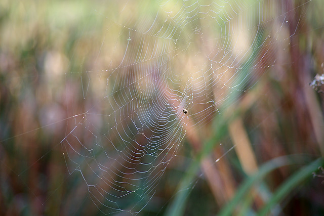 Web in the rushes