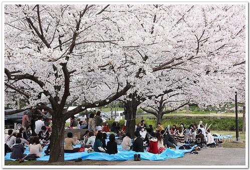 大阪城公園_好歡樂