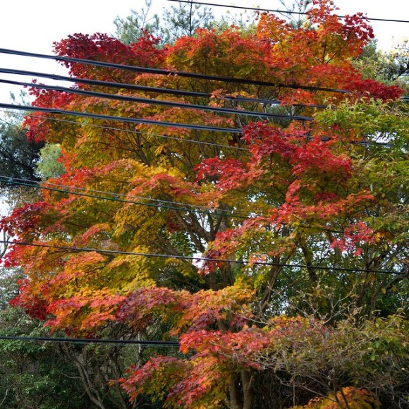 121103_coloredleaves05