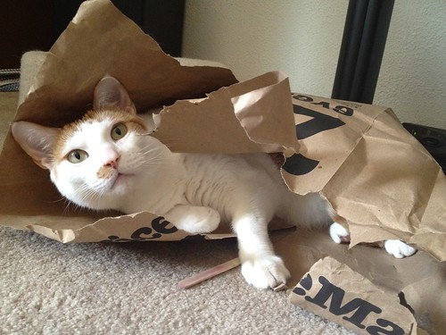 Tanzi and destroyed bag