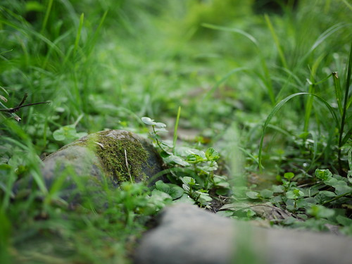 stones overgrown on the path