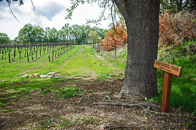A wooden sign marks an important turn on the Zinfandel Trail.