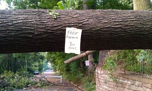 Tree fell; free firewood; you haul.