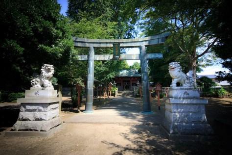 #48 The Giant Zelkova of Naganuma Hachiman Shrine