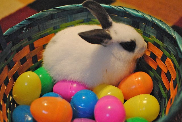 Bunny in his Easter Basket