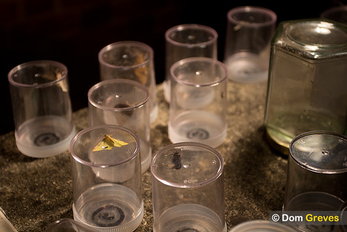 Moth trap jars