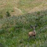 Deer @ Wind Cave NP