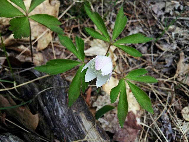 Pretty Wildflower copy