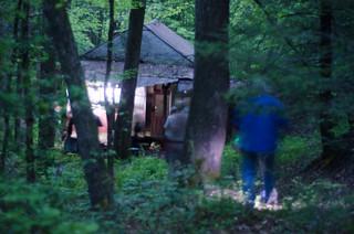 Blue Ghost Fireflies-006