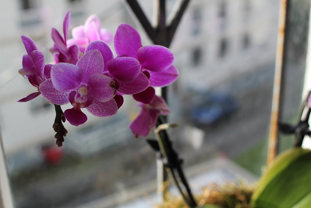 Monday: I adore these orchids