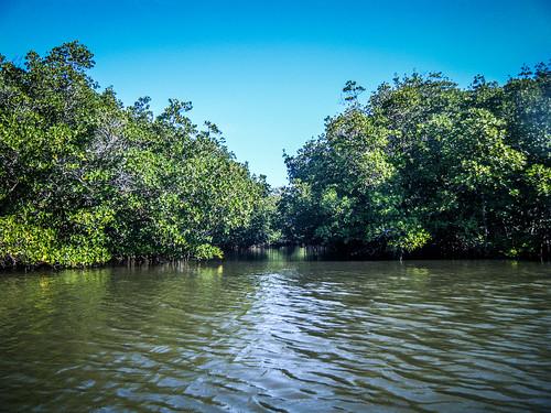 Indian River Paddling-4