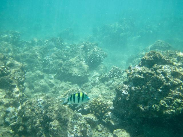 Mokapu Beach Snorkelling