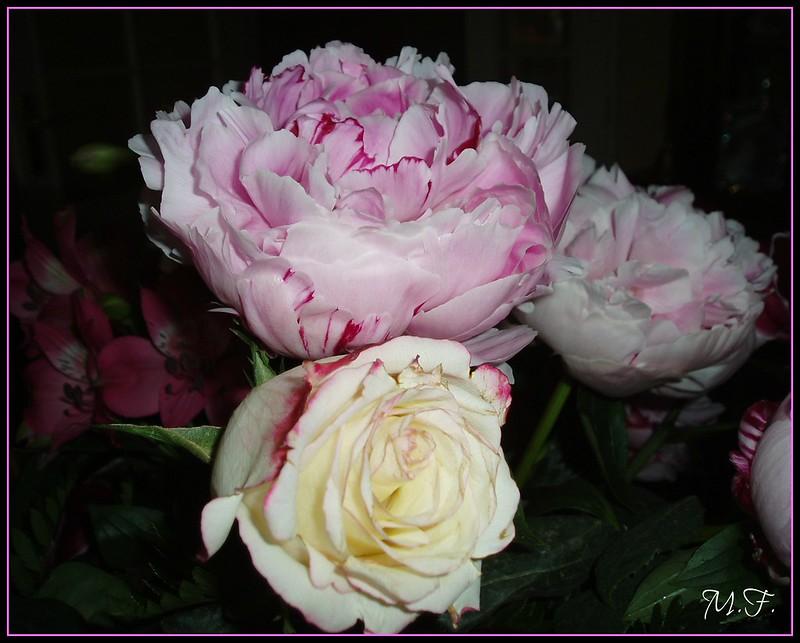pivoine et rose