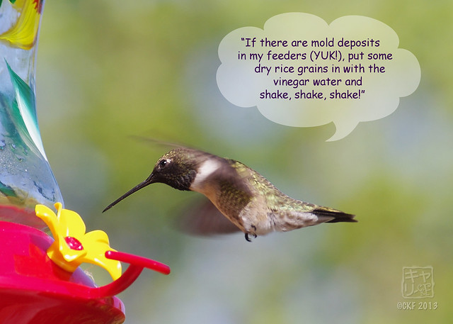 Hummingbird Dialogue 6