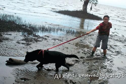 สุนัขเป็นโรคไตวาย สาเหตุจากอาหารการกิน