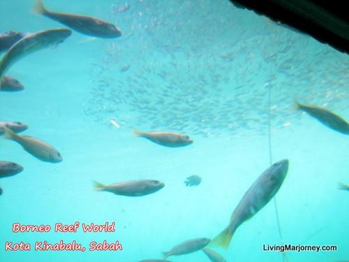Underwater Observatory, Borneo Reef World