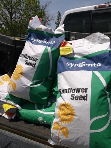 Syngenta seed