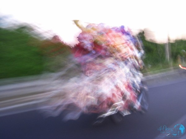 Bali Roller