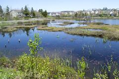 Belcher's Marsh Park