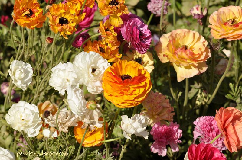 flower_fields_gold_web