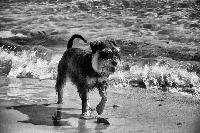 Fritz at Rose Bay