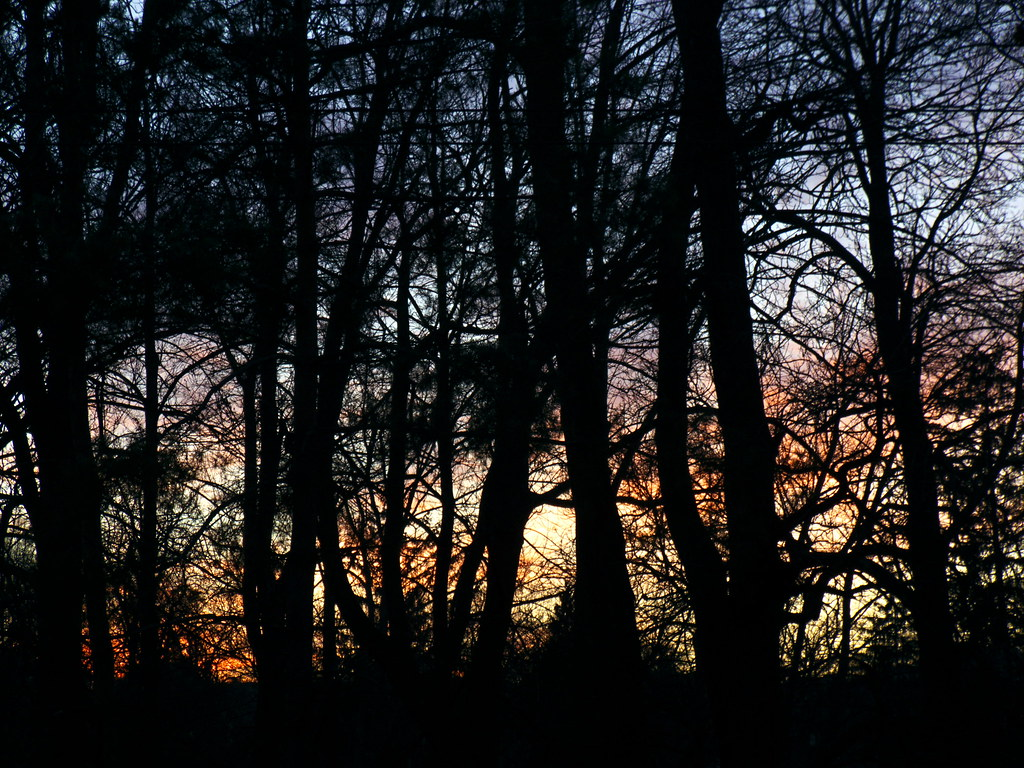 Sunset Seen Through the Park