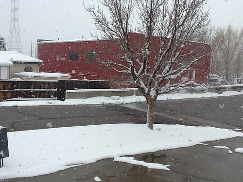 4-9-13 CO - Golden Snow Storm 2