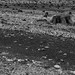 L'Ospedale (Corse du Sud) - Life on Mars
