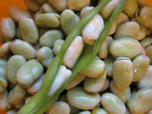 Fava beans out of pod