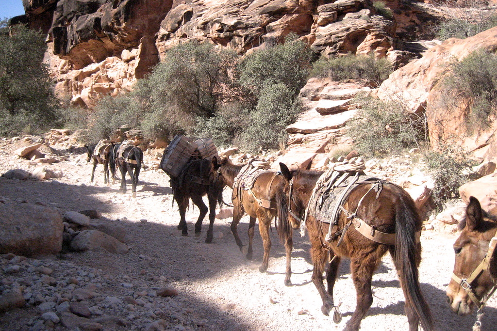 Ranching in Havasupai