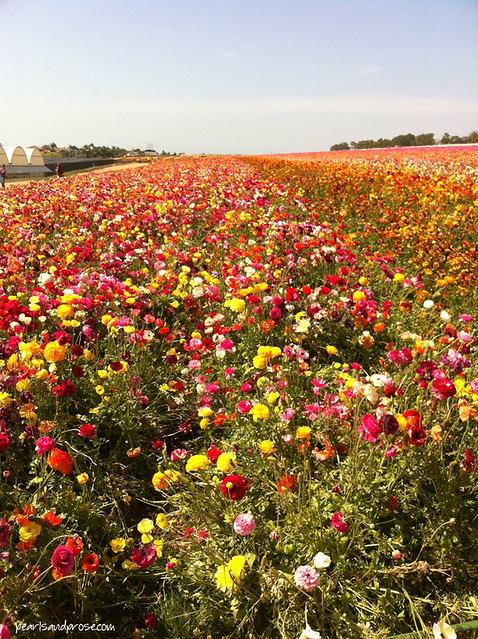 flower_fields_multishade_web