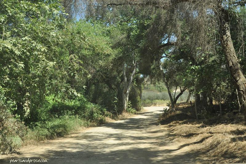 lavender_road_web