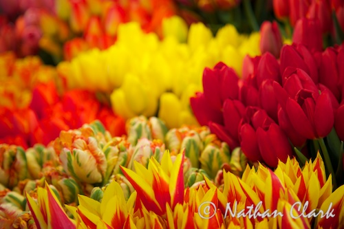 Pike Place Tulips (2)