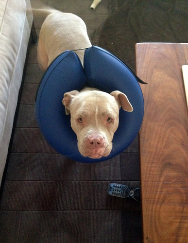 Cadence - Back on her feet with a cool cone.